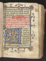 Illuminated Initial And Border, In The Prayerbook Of John Northewode f.75r
